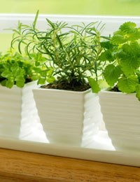 How to include herbs in everyday cooking