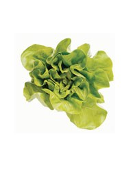 Ask the experts: Lettuce