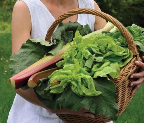Gardening diary: Late summer