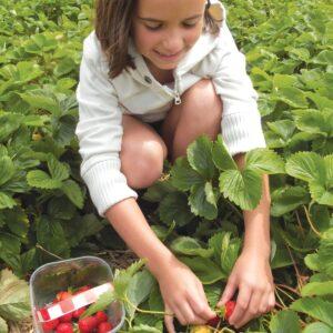 Gardening diary: Early winter