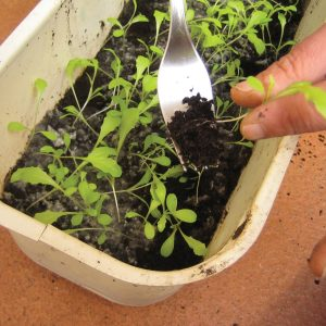 Gardening diary: Mid-spring