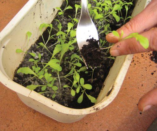 Gardening diary: October
