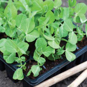Gardening diary: Late winter