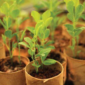 Gardening diary: Early spring