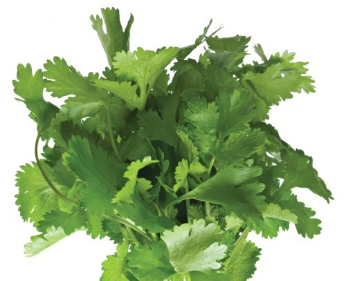 In season late summer: Coriander