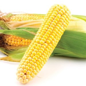 In season late summer: Sweet corn