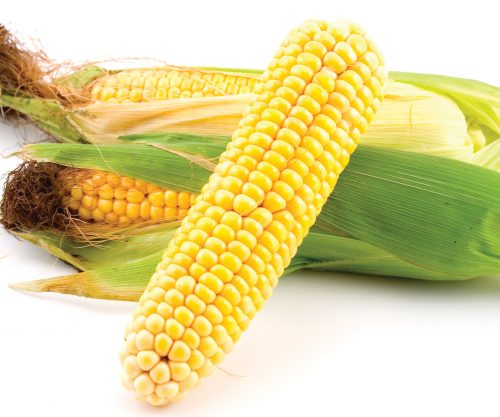 In season late summer: Sweet corn