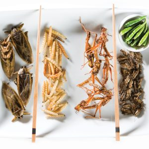 Eating insects a step too far for some