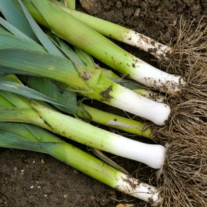 The lost plot: How to grow leeks