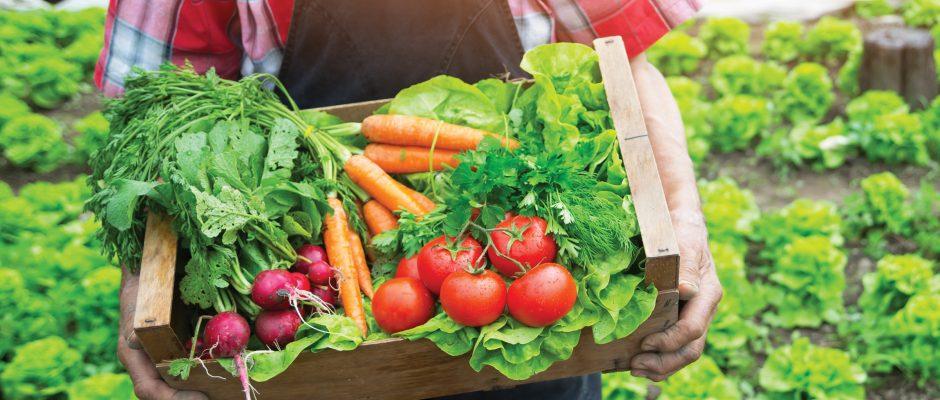 Science update: Is organic food healthier?
