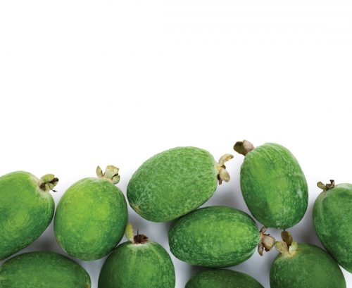 The lost plot: How to grow feijoas