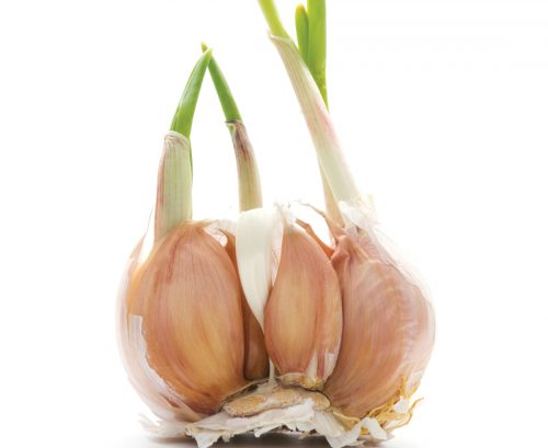 The lost plot: How to grow garlic