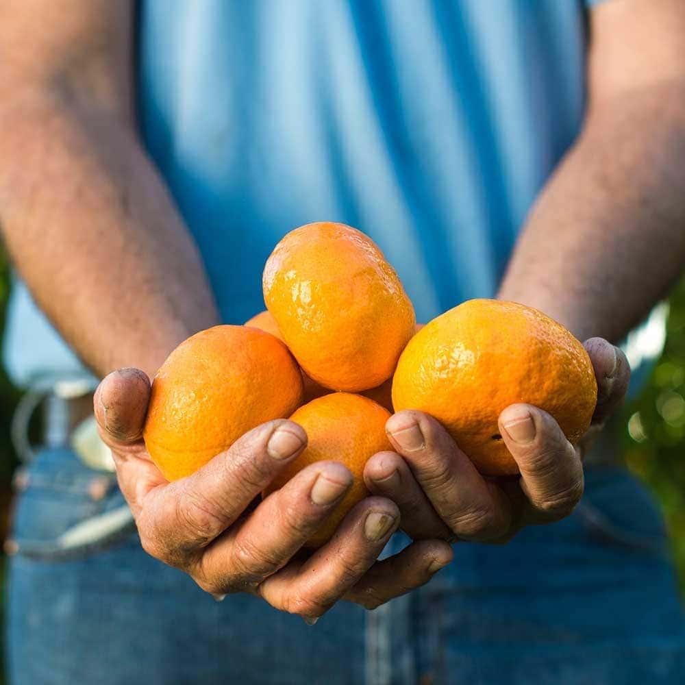 Gisborne Encore Mandarins – make summer sweet