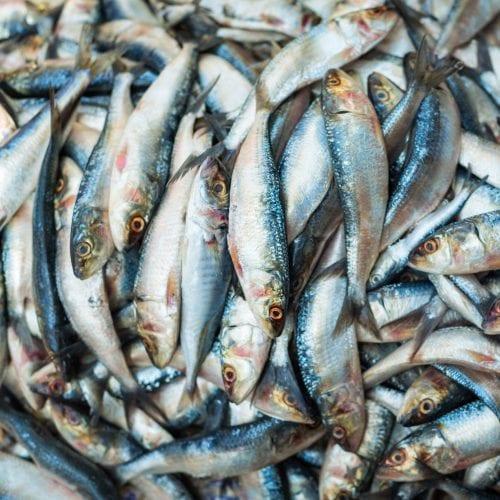 Vegetarian fish sauce substitute