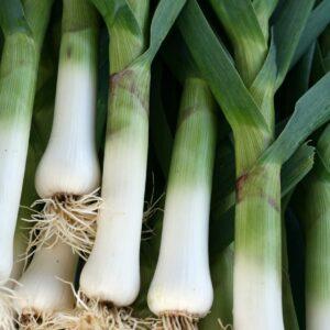Ask the experts: Allium