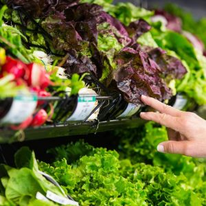 Ask the experts: Lettuce and chlorine