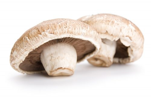 Ask the experts: Mushrooms and fungal infections