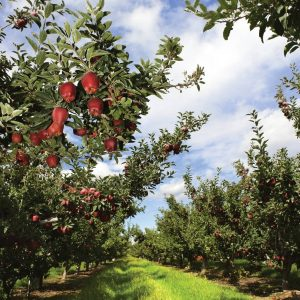 Ask the experts: Pesticides