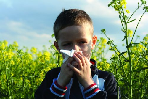 Ask the experts: Dripping and lard helps allergies?
