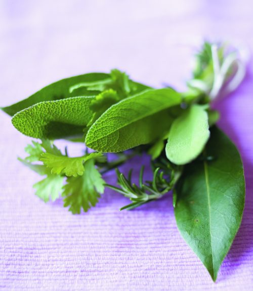 Back to basics: Herbs