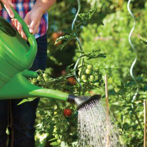 Gardening diary: Mid-summer