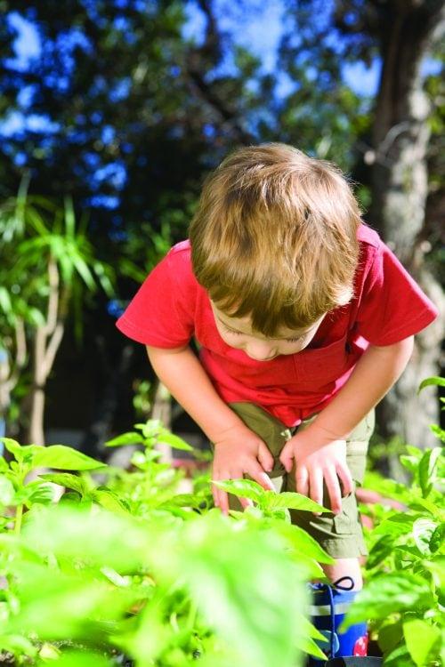 Gardening diary: December