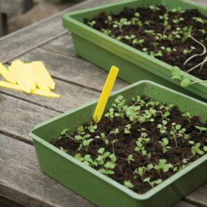 Gardening diary: Early autumn/fall