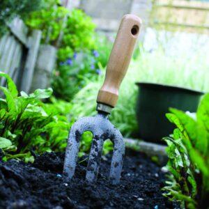 Gardening diary: Late spring