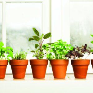 Grow your own indoor herbs