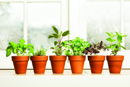 Grow your own indoor herbs