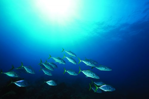 Guide to sustainable fish