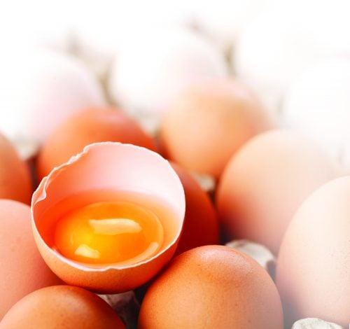 How do they produce eggs?