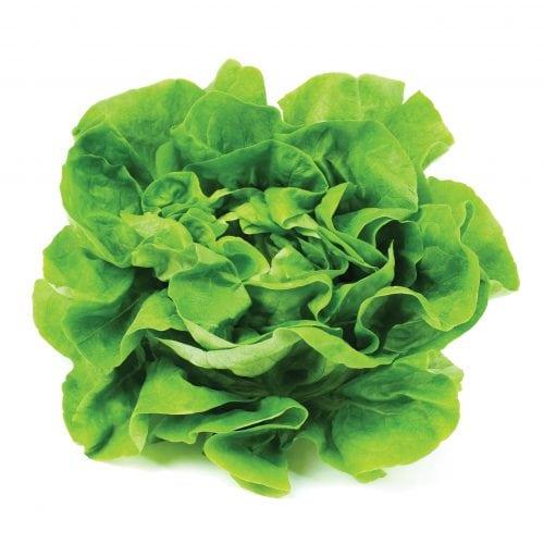 In season mid-summer: Lettuce