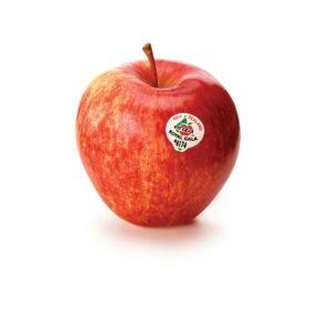 In season early autumn: Apples