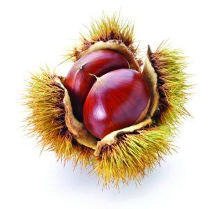 In season mid-autumn: Chestnuts