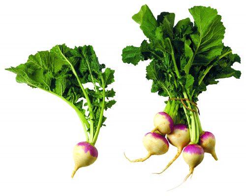 In season mid-autumn: Turnips