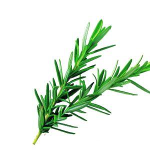 In season late winter: Rosemary, bok choy, kaffir lime leaves, shallots