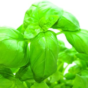 In season late spring: Basil