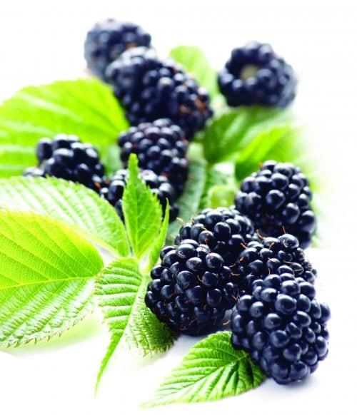 In season November: Blackberries
