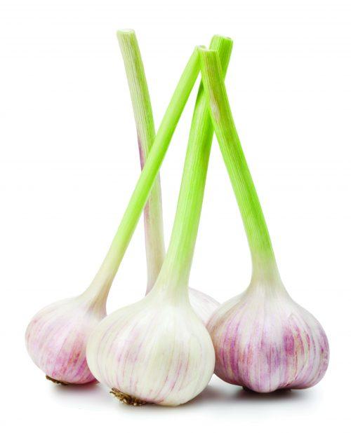 In season October: Garlic