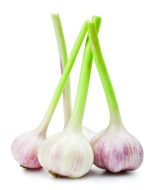 In season mid-spring: Garlic