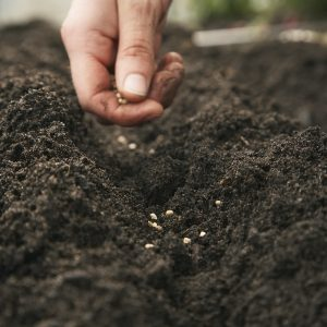 Save those seeds