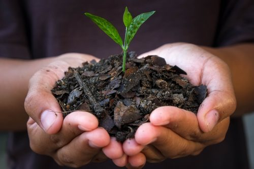 Turn over a new leaf: How to live more sustainably