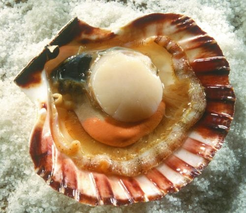 What to do with scallops