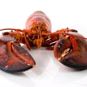 Why we like shellfish