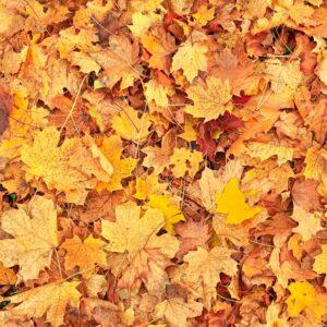 Autumn garden: Pest wars and forgotten flavours