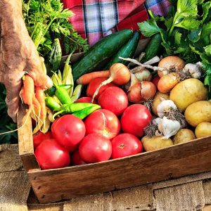 More veges can boost vitality in just two weeks