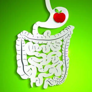 Your amazing digestive system