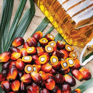 Spotlight on palm oil