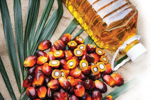 Spotlight on palm oil